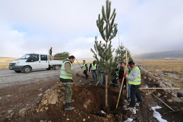 Erciyes dağında ağaçlandırma hamlesi