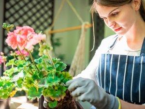 Bitki yetiştirmek isteyenlere 5 öneri