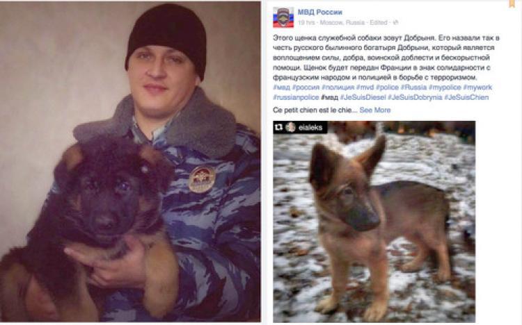 Rusya, dayanışma göstergesi olarak Fransa'ya köpek yavrusu gönderiyor