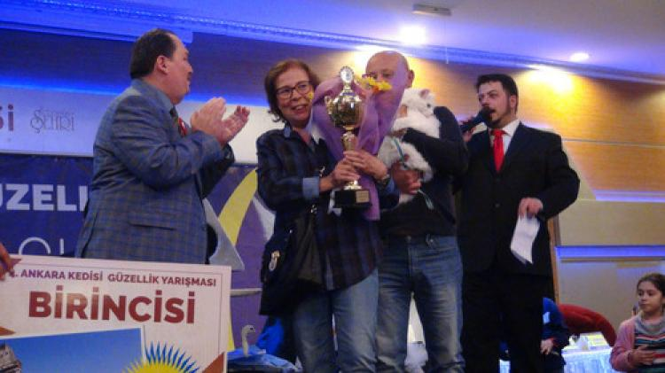 Ankaralılar en güzel kediyi seçti