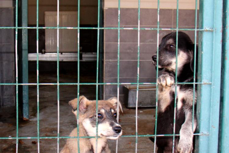 Çankaya'da sokak hayvanları için kış hazırlıkları