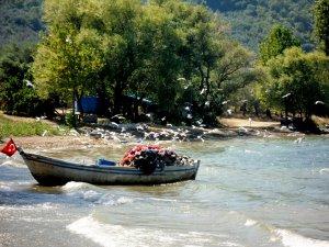 İznik Gölü'nde balık bolluğu