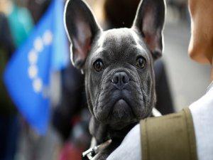 Köpek diye aldığı hayvan bakın ne çıktı?