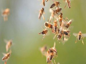 Arılar saldırdı!