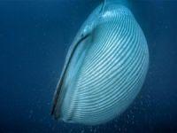 Balinalar meğer uzaydan bile görülebiliyormuş!