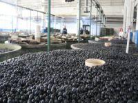 Marmarabirlik  33 bin ton ürün aldı