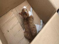 Otomobilin ezdiği kediye esnaftan yardım eli