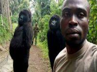 İnsan taklidi yapan gorillerden selfie