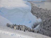 Binlerce yavru penguen öldü