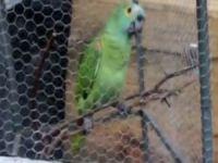Polisten Papağan'a gözaltı