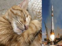 Kedi'ye kozmik cenaze töreni
