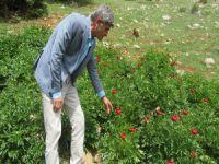 Bu çiçeği koparana 60 bin 163 lira ceza
