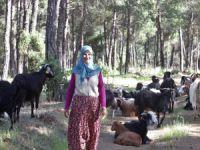 Bursa'da 32 yıldır ormanda yaşıyorlar
