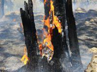 Bayramda Bursa'da orman yangını!