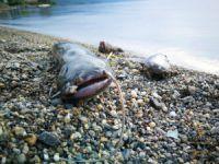 İznik Gölü'nde korkutan görüntü!