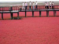 Görenleri şaşkınlığa uğratan Kırmızı Plaj