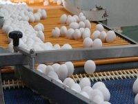 Yumurta sektöründe kriz!