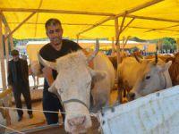 Mudanya'da kurbanlıklar satışa sunuldu