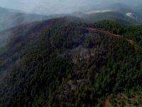 Türkiye'nin kararan ciğerleri havadan görüntülendi