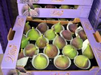 Mudanya'da siyah incir hasadı başladı