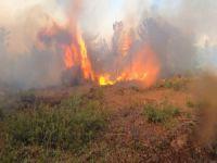 Bursa'nın ormanları kasıtlı yakılmış