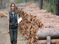 Orman Bakanlığı 5 bin personel alacak