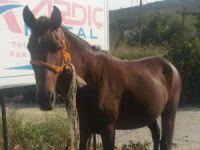 Bursa'daki sahipsiz atlar belediye korumasında