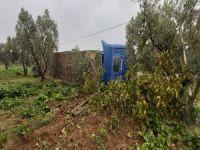 Tır zeytin bahçesine devrildi