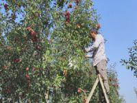 Bursalı çiftçiden örnek hareket