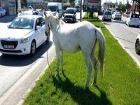 Başı boş atlar tehlike saçıyor