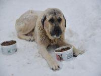 Hayvanlar kışı tok geçirecek