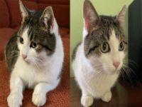 Şifacı kedinin fiyatı 320 bin dolar