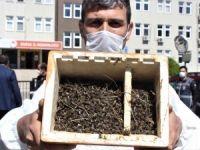 Bursa'da arı ölümleri devam ediyor