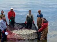 İznik'te gümüş balığı avı