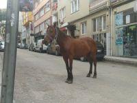 Bursa sokakları atlara kaldı