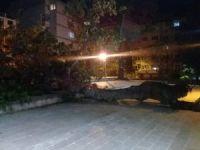 Bursa'daki asırlık çınar devrildi
