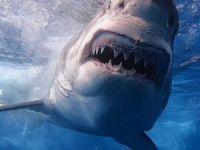 Katil köpekbalığı öldürdü