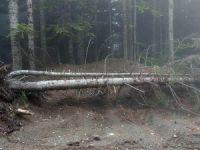 Uludağ'da ağaç katliamı!