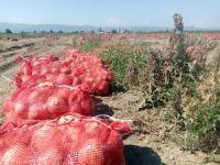 Binlerce ton soğan bedava dağıtıldı