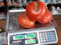 Bu domatesleri gören şaşırıyor