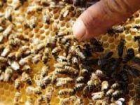 Boş arı kovanları bal fiyatlarına yansıdı!