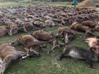 Portekiz'de hayvan katliamı!