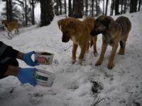 Sahipsiz köpekler beslendi