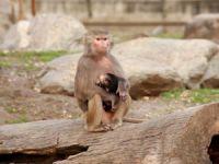 Bursa Hayvanat Bahçesi kapatıldı