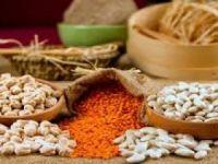 Bakliyat yağlı tohumlar ve mamulleri ihracatı