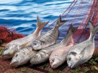 2022 yılını Balıkçılık ve Su Ürünleri Yılı ilan ettiler