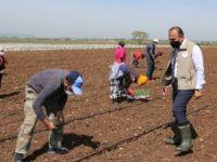 Mevsimlik işçiler Bursa'ya geldi