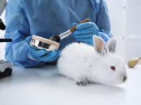192 milyon hayvan deney için kullanılıyor