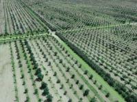 Konya'da ağaç katliamı!