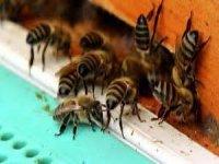 Arı saldırısı: 1 ölü, 4 yaralı